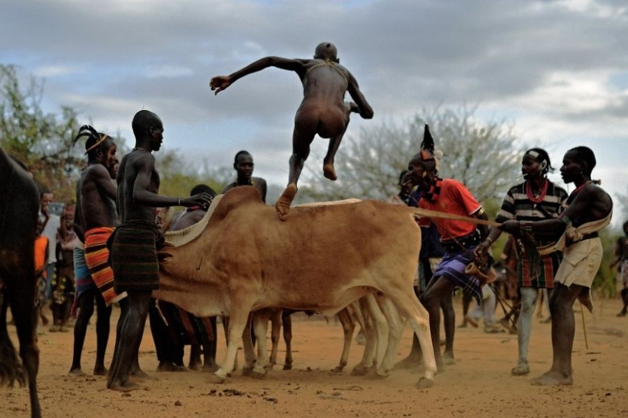 bull jumping in africa