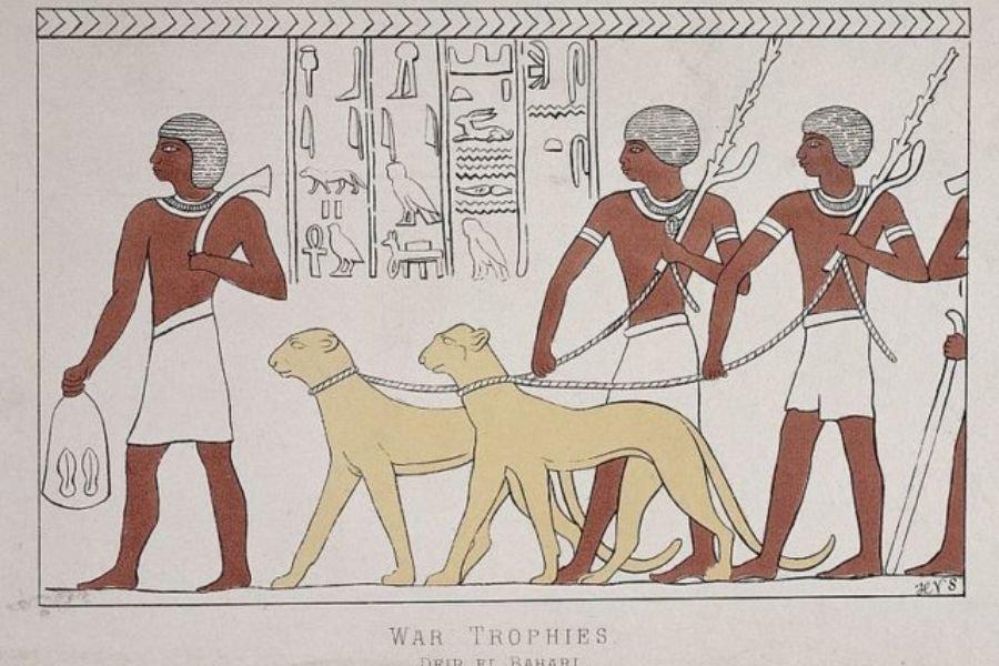 Egyptian pets