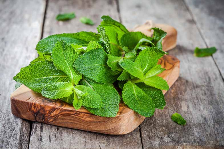 Mint And Tulsi