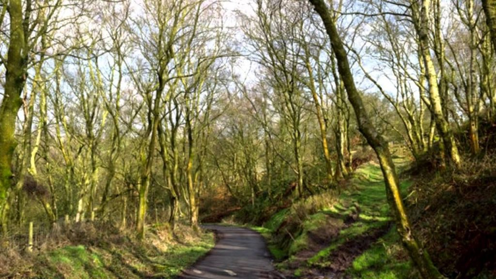On a lane in Spring - John Clare