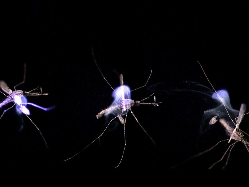 14)  The Malaria-Proof Mosquito and The Mosquito Laser - Late 2000s