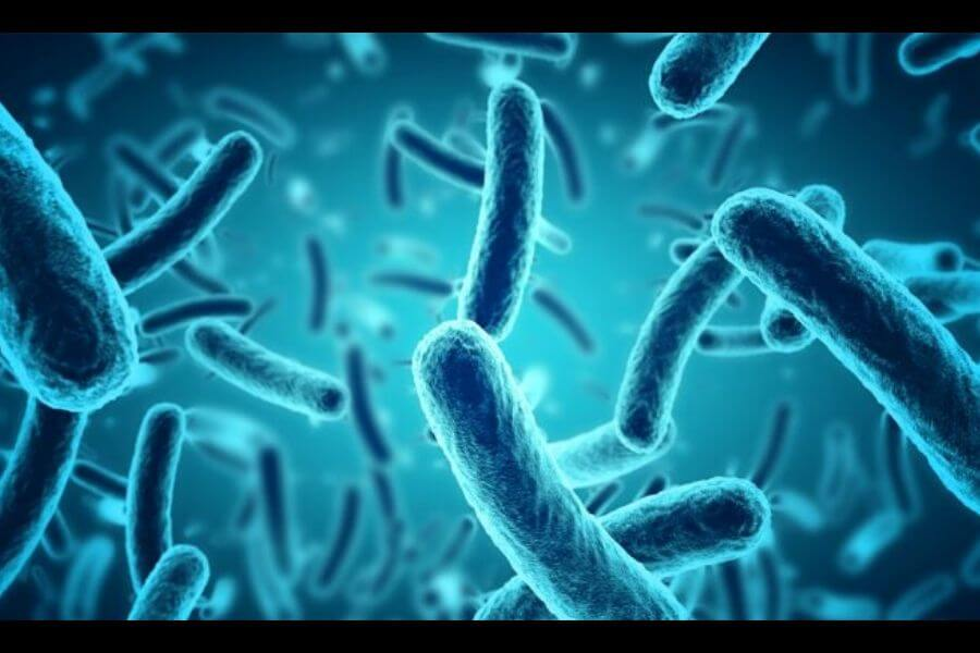 Discovery of UV resistant bacterial species