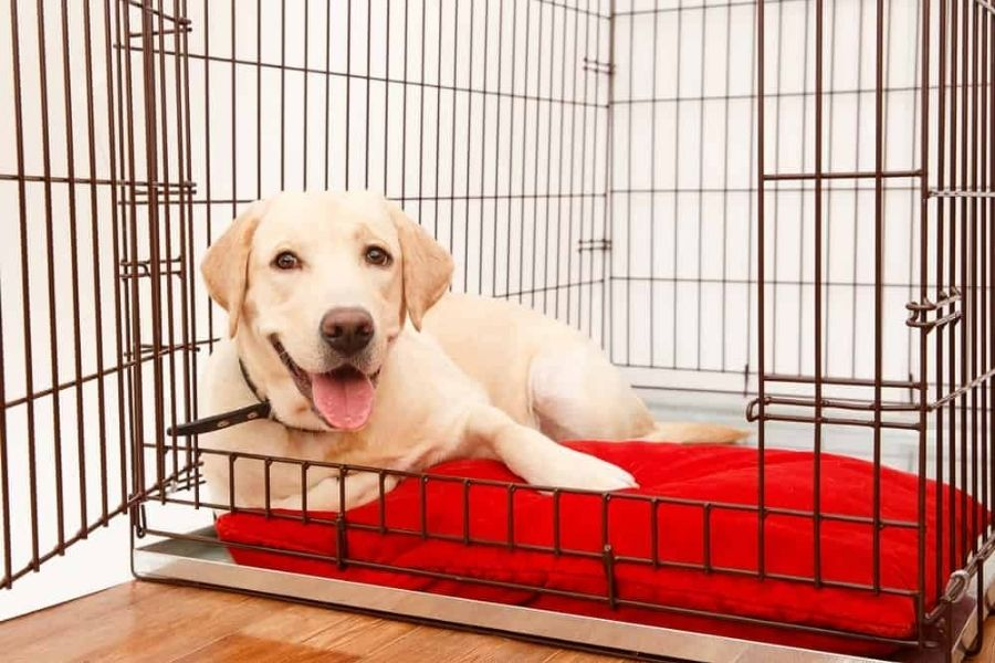 Consider Crate Training For Your Dog