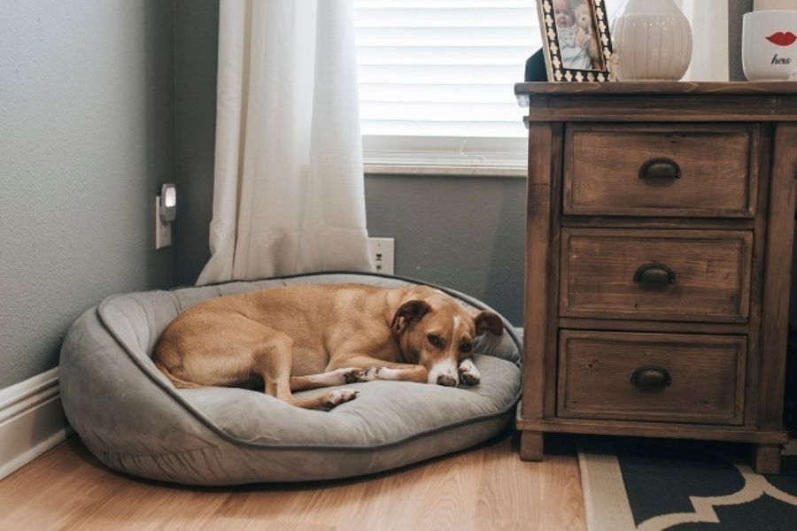 Give Your Pet Their Own Space