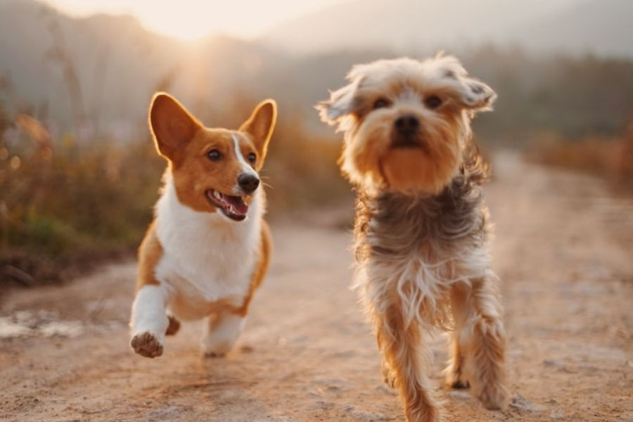 Give Your Pet The Exercise It Needs