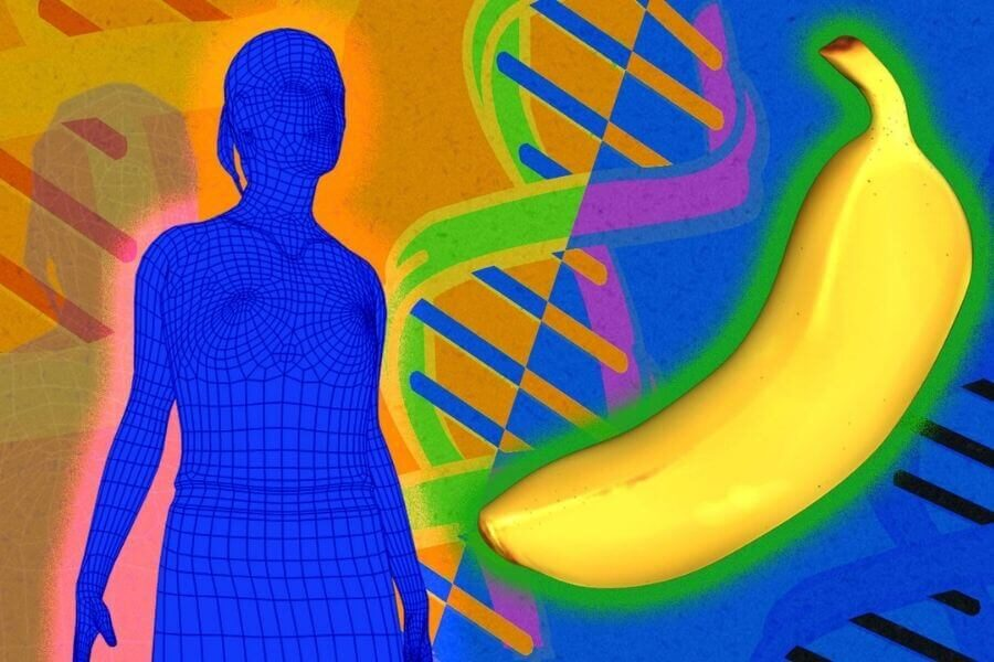Bananas have genetic similarities with humans