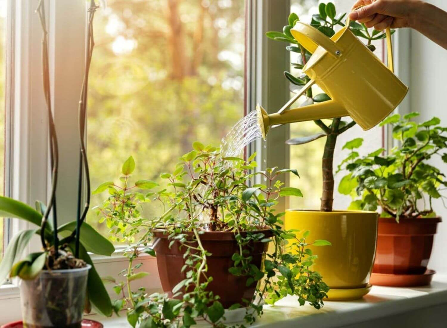 Top 15 Best Home Plants For A Better Lifestyle